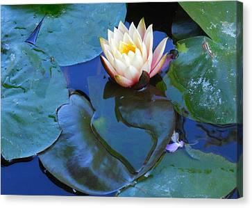 Lotus 2 Canvas Print by Sarah Vandenbusch
