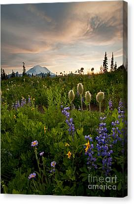 Anenome Canvas Print - Lupine Sunset by Mike  Dawson