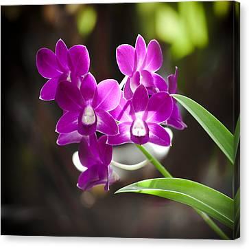 Magenta Orchids Canvas Print by Joe Carini - Printscapes