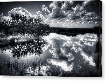Mangroves In The Morning Canvas Print by Bob Hartmann