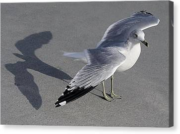 Me And My Shadow Canvas Print by Paulette Thomas