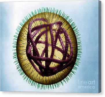 Measles Virus Canvas Print