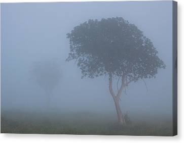 Misty Morning Canvas Print by Hein Welman