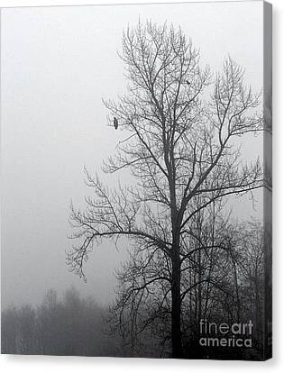 Misty Morning Vigil Canvas Print by KD Johnson
