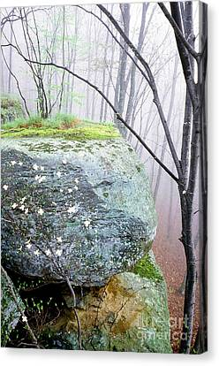 Dogwood Lake Canvas Print - Misty Spring Morning by Thomas R Fletcher