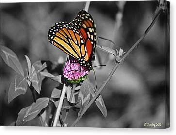 Monarch Butterfly On Clover Canvas Print