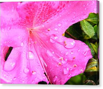 Canvas Print featuring the photograph Morning Dew by Brian Wright