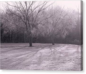 Morning Frost Canvas Print
