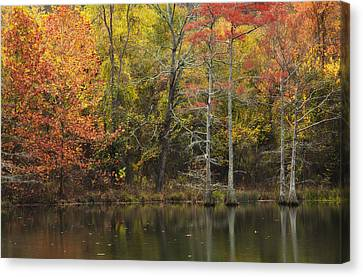 Morning Light In The Forest Canvas Print by Iris Greenwell