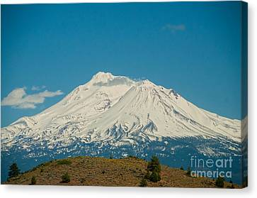 Mount Shasta Canvas Print by Carol Ailles