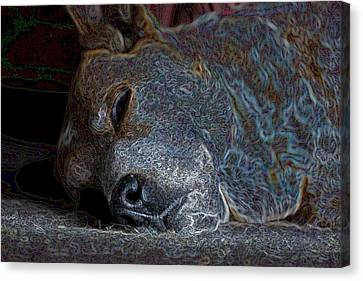 Nap Time Canvas Print by One Rude Dawg Orcutt