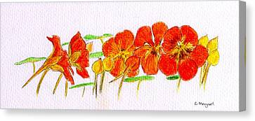 Canvas Print featuring the drawing Nasturtiums by Barbara Moignard