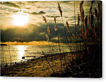 New Beginnings Canvas Print by Jason Naudi Photography