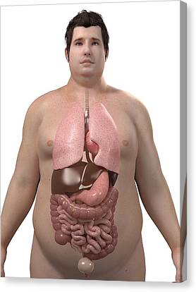 Obese Man's Organs, Artwork Canvas Print by Sciepro