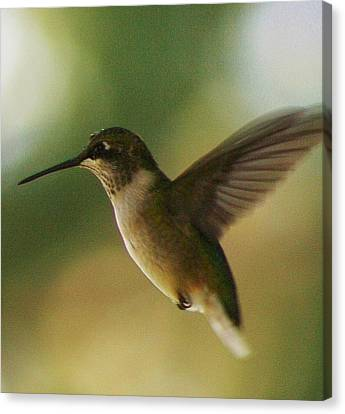 On The Fly Canvas Print by Bruce Bley