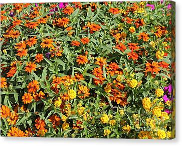 Orange And Yellow Canvas Print by Theresa Willingham
