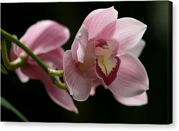 Orchid's  Mystery Canvas Print by Valia Bradshaw