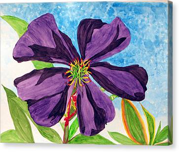 Our Very Bold Tibouchina Canvas Print by Debi Singer