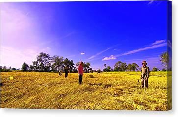 Paddy Field Canvas Print by Arik S Mintorogo