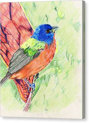 Bunting Canvas Print - Painted Bunting by Karen Clark