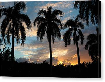 Canvas Print featuring the photograph Palm Tree Silhouette by Karen Lee Ensley
