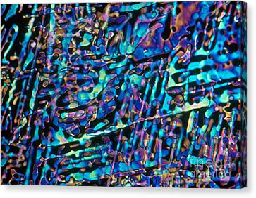 Paradichlorobenzene Crystals Canvas Print by Michael Abbey and Photo Researchers
