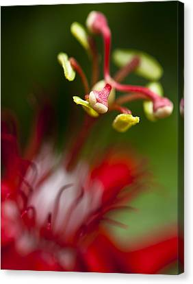 Passiflora Flower Canvas Print by Zoe Ferrie