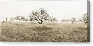Peach Orchard Gettysburg Canvas Print by Jan W Faul