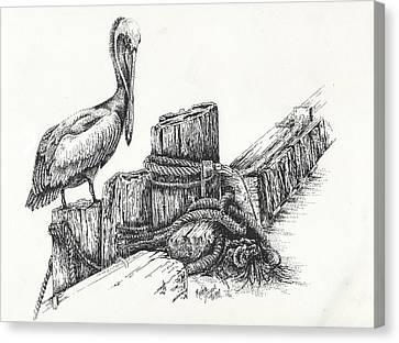 Pelican At Dockside Canvas Print