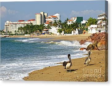 Pelicans On Beach In Mexico Canvas Print by Elena Elisseeva