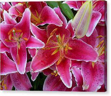 Pink Lilies With Water Droplets Canvas Print