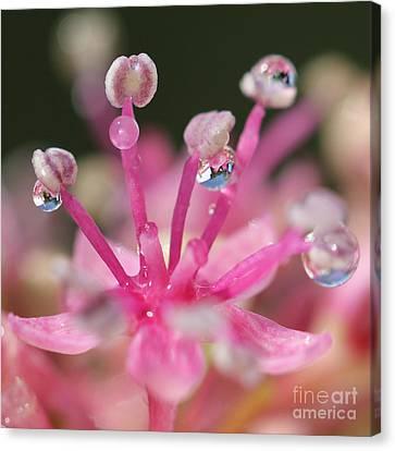 Pink Magic Canvas Print by Karin Ubeleis-Jones