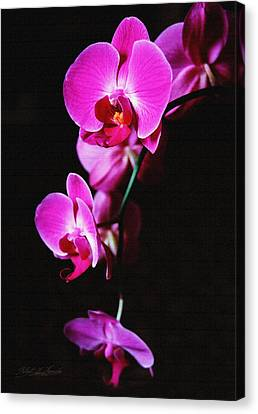 Canvas Print featuring the photograph Pink Orchid Trio by Robert Kernodle