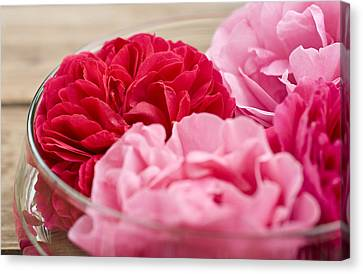 Pink Roses Canvas Print by Frank Tschakert