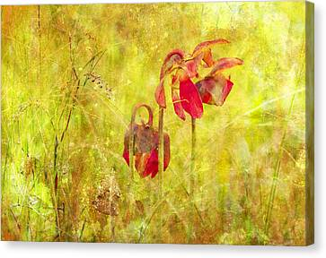 Pitcher Plant Canvas Print