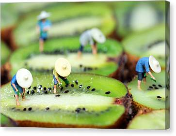 Planting Rice On Kiwifruit Canvas Print by Paul Ge