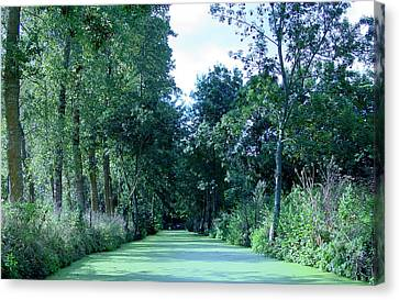 Poitevin Marsh Canvas Print by Poitevin Marsh