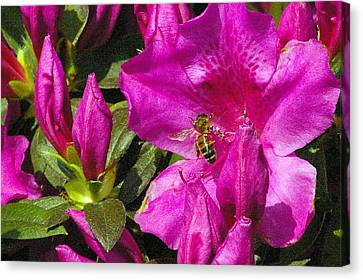 Canvas Print featuring the photograph Pollinating  by Brian Wright