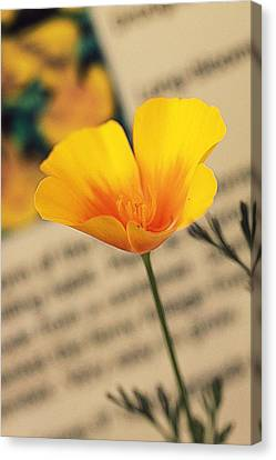 Poppy Canvas Print by Amy Neal