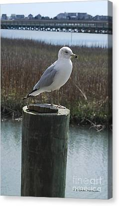 Posing Seagull Canvas Print