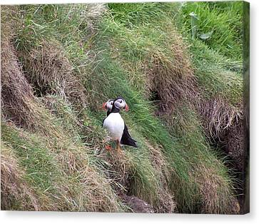Puffins Canvas Print by George Leask