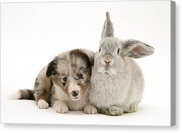 Pup With Rabbit Canvas Print