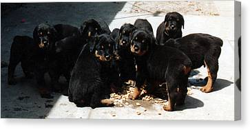 Puppy Chow Canvas Print