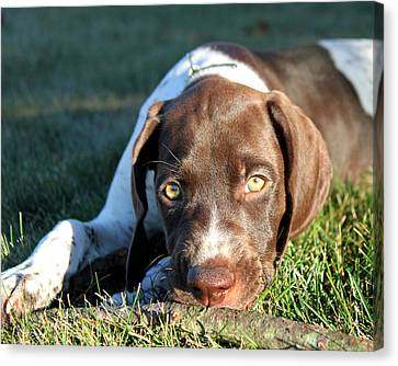 Puppy Eyes Canvas Print by Brook Burling