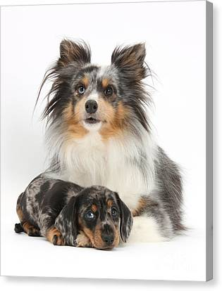 Puppy Pals Canvas Print by Mark Taylor