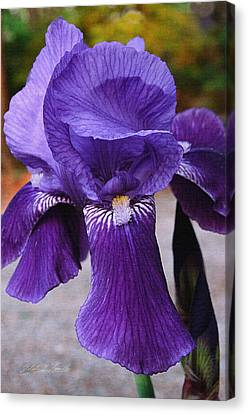 Canvas Print featuring the photograph Purple Iris by Robert Kernodle