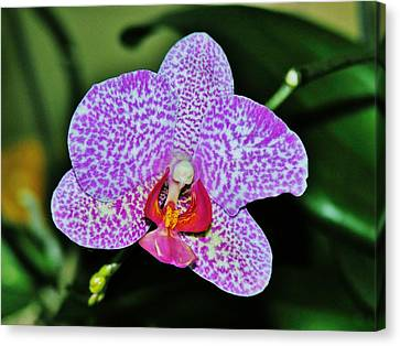 Canvas Print featuring the photograph Purple Orchid by Sherman Perry