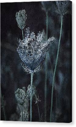 Queen Anne's Lace Canvas Print by Bonnie Bruno