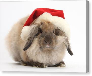 Rabbit Wearing Christmas Hat Canvas Print by Mark Taylor
