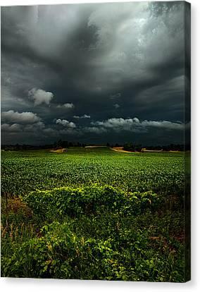 Rain Canvas Print by Phil Koch